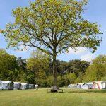 WiFi op camping 't Woutershok